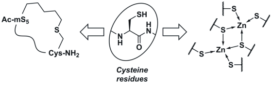 cysteine an essential inessential amino acid european peptide society