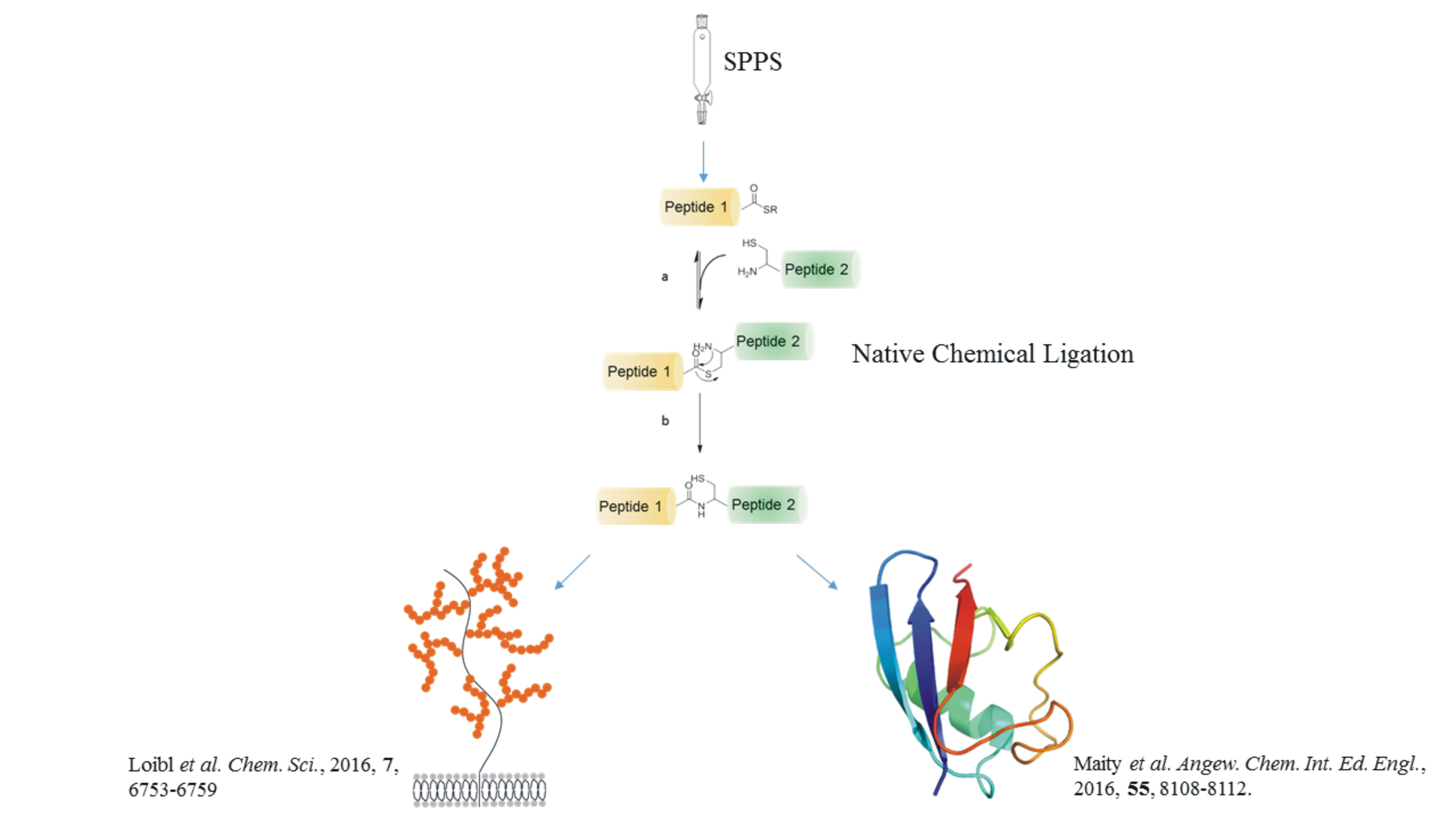 Native Chemical Ligation and Beyond: Recent Developments in